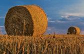 Picardie : les drones révolutionnent les cultures de céréales