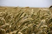 Bruxelles souhaite encourager l'usage des engrais organiques et à base de déchets